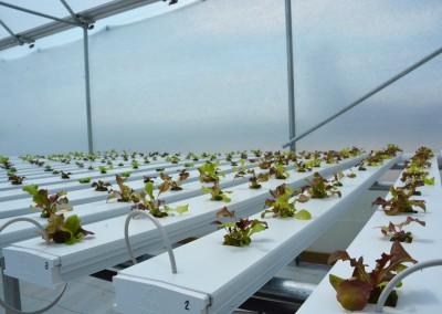 Red Acres Hydroponics Seedlings